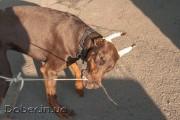 Играем с собакой